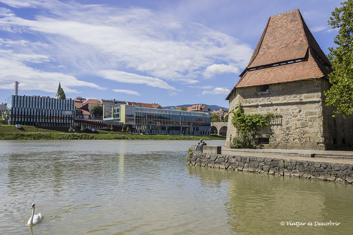 zona del río Drava con un cisne en Maribor