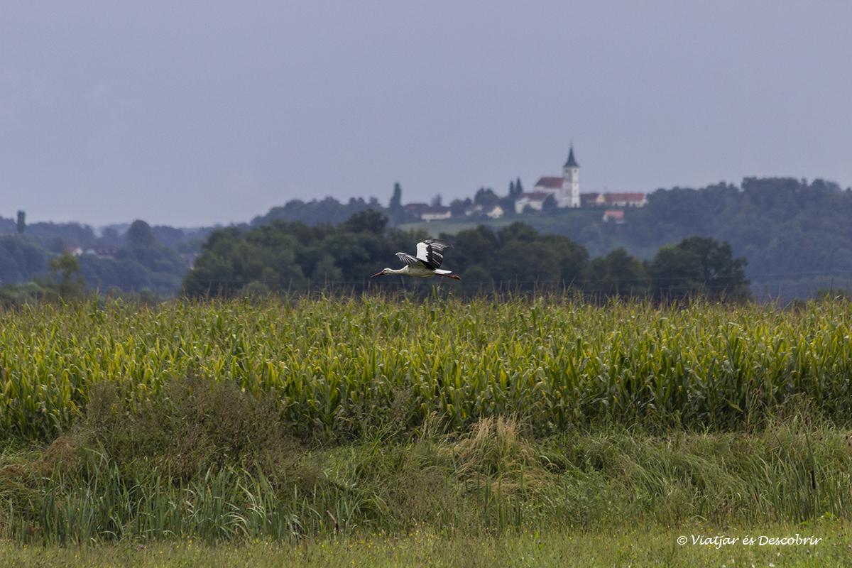 cigüeña volando en la región rural de Maribor