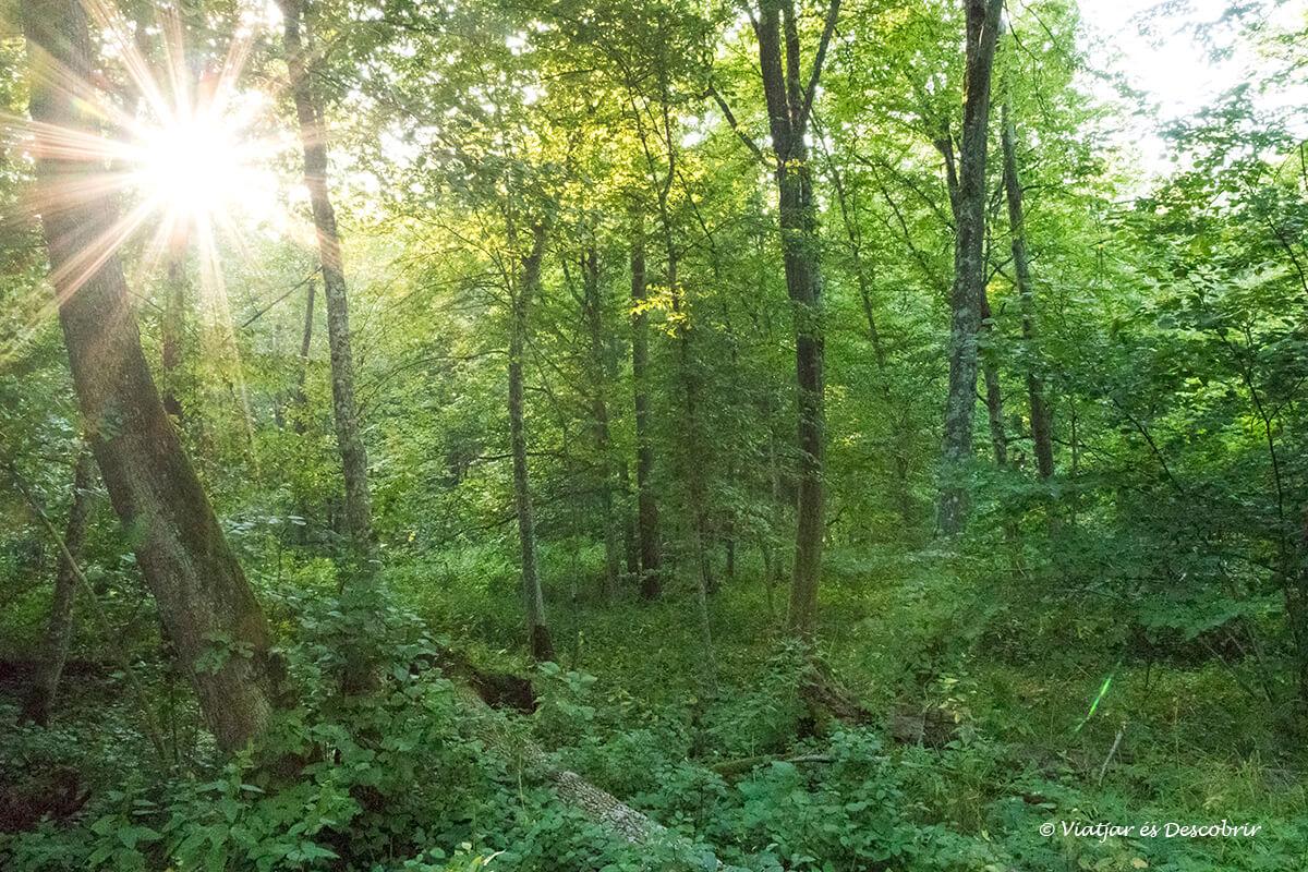 detalles de los bosques de polonia