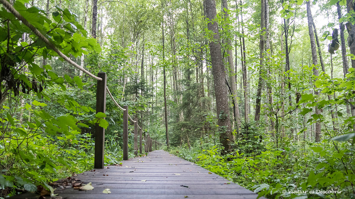 exursion famosa en los bosques de Bialowieza