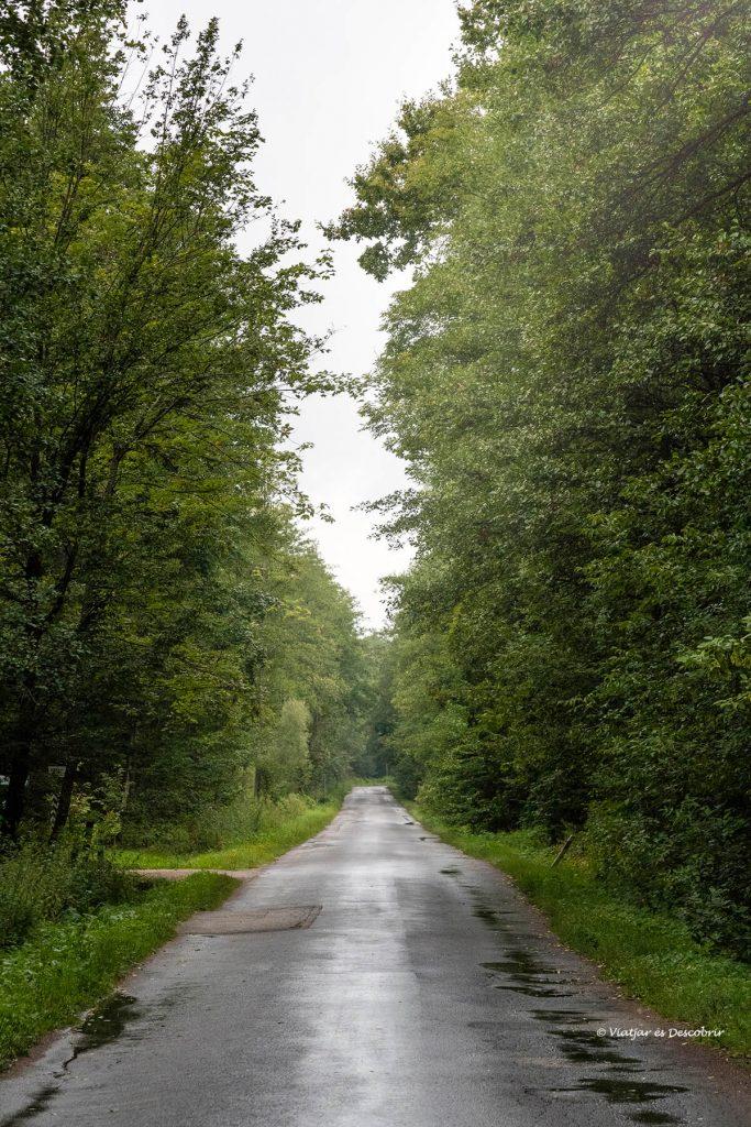 carretera del parque nacional Bialowieza y sus bisontes