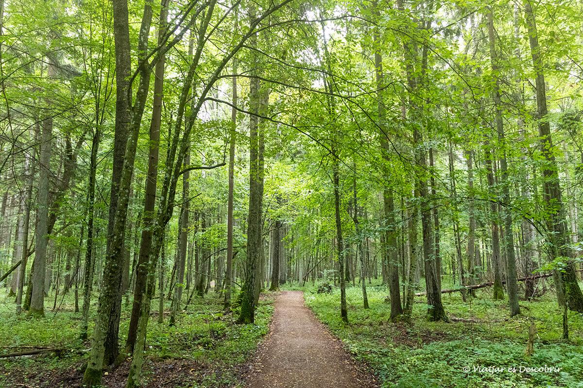 excursiones por los bosques de Bialowieza