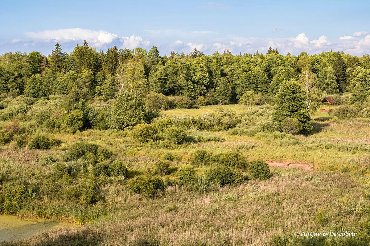 vista panorámica del norte de Bialowieza durante una excursión