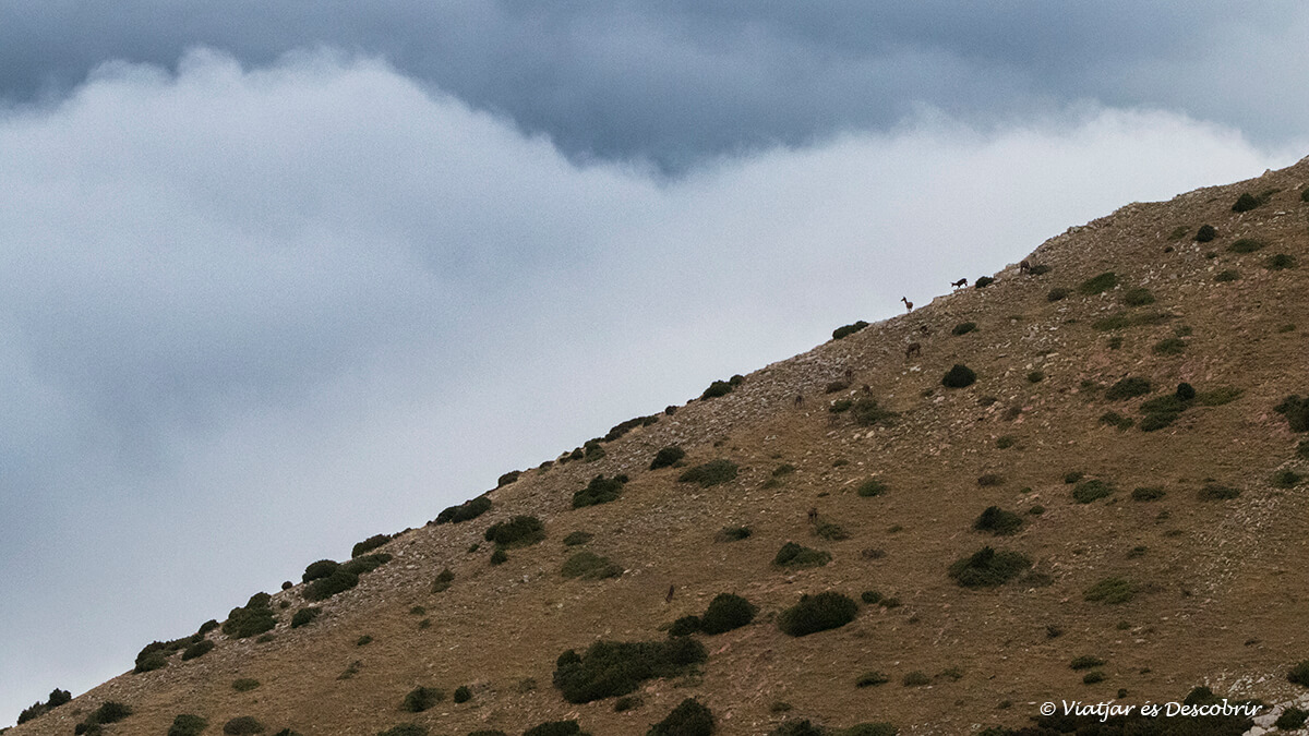 ciervos en la lejanía consejos para observar la berrea del ciervo