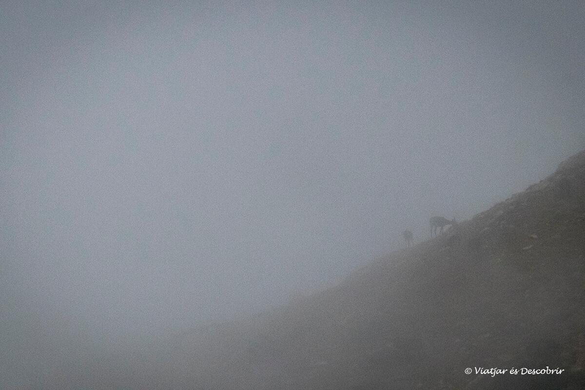 niebla durante la berrea del ciervo en Cataluña