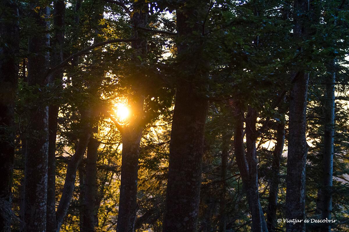puesta de sol en el interior del bosque a Eslovenia en el territorio del oso pardo