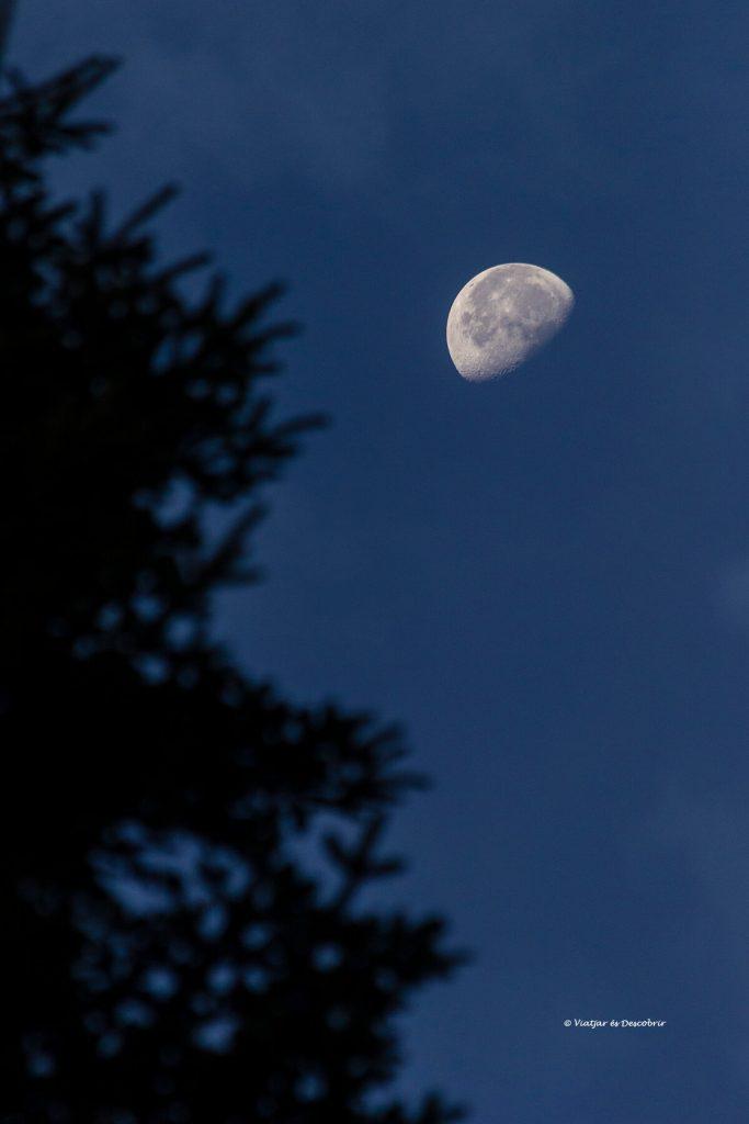 oscuridad y la luna entre los árboles de los bosques con osos pardos en Eslovenia