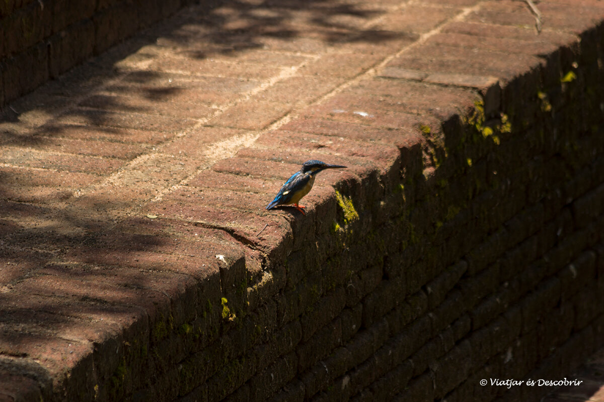 pájaro los jardines reales de Sigiriya