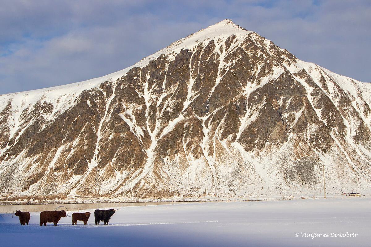 detalles del viaje a las islas Lofoten en coche