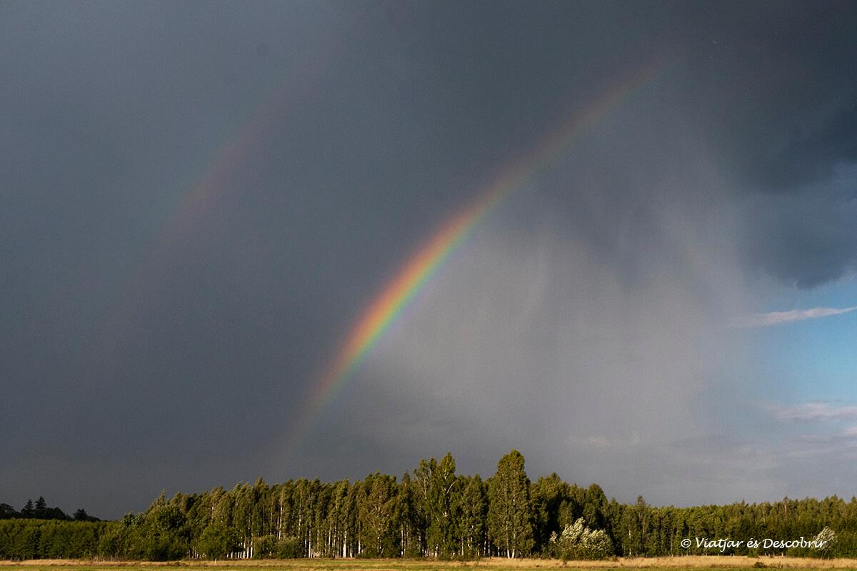 arcoiris sobre el bosque de Bialowieza