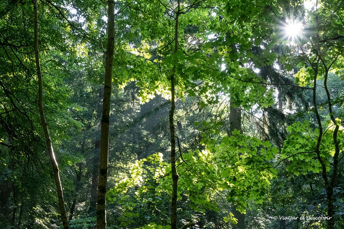 detalles del bosque primitivo y salvaje de Bialowieza