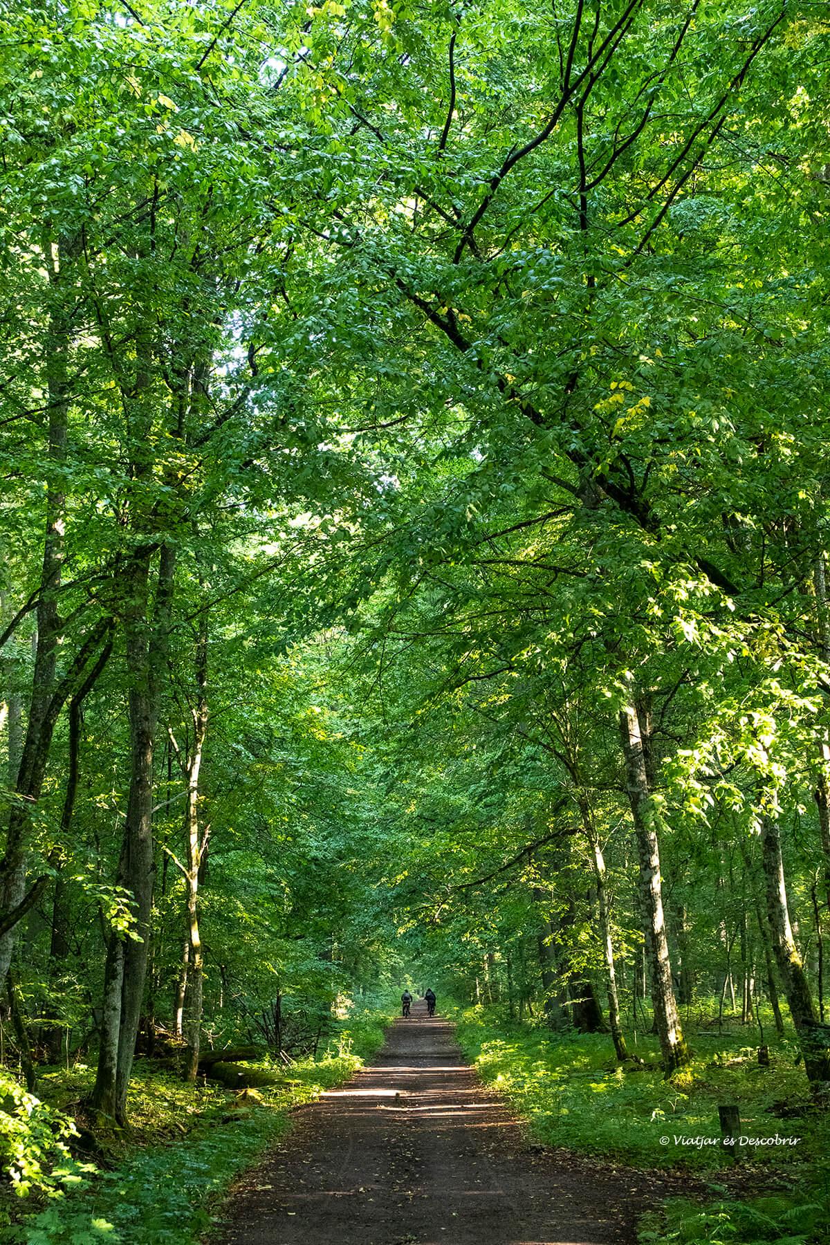 imagen vertical del bosque de Bialowieza y un camino