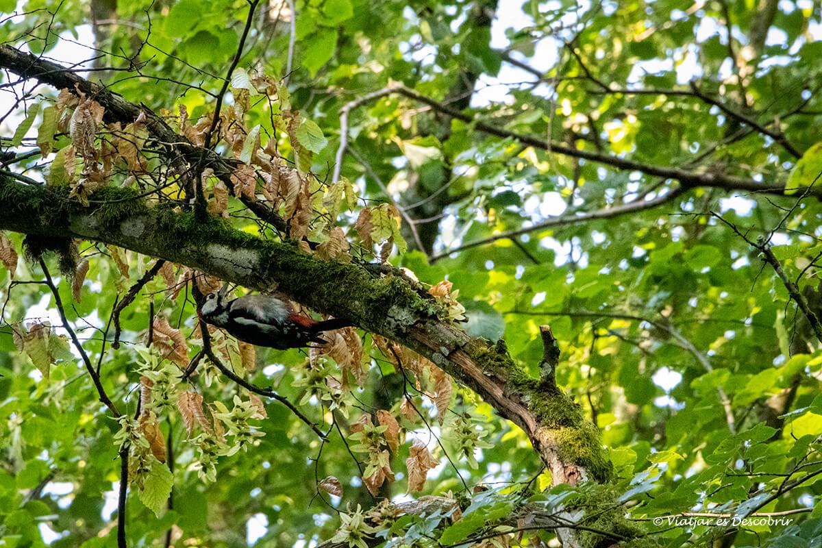 pico entre las ramas de un árbol del bosque