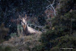 Dónde ver animales salvajes en Cataluña